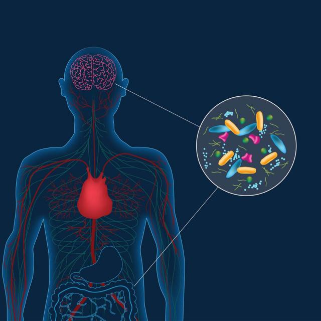 La Salud del Cerebro Depende de la Buena Bacteria Intestinal