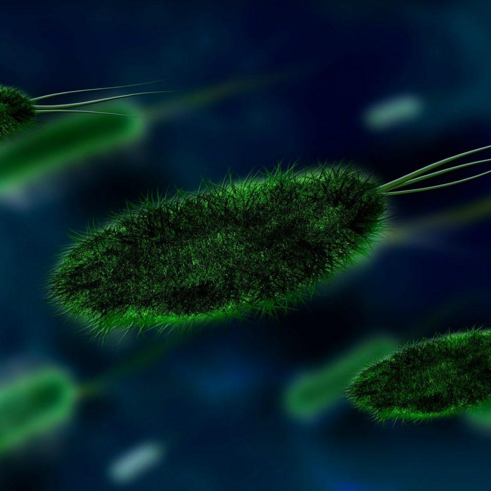 Disbiosis Intestinal & Cándida
