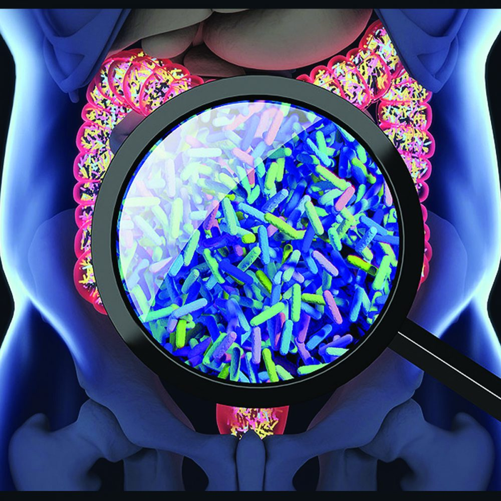 Cómo Regenerar la Mucosa Intestinal & Corporal