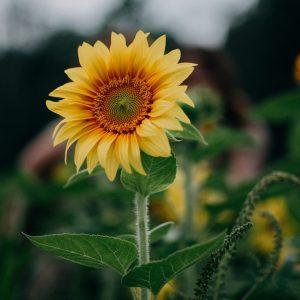 Florece-donde-estas-plantado
